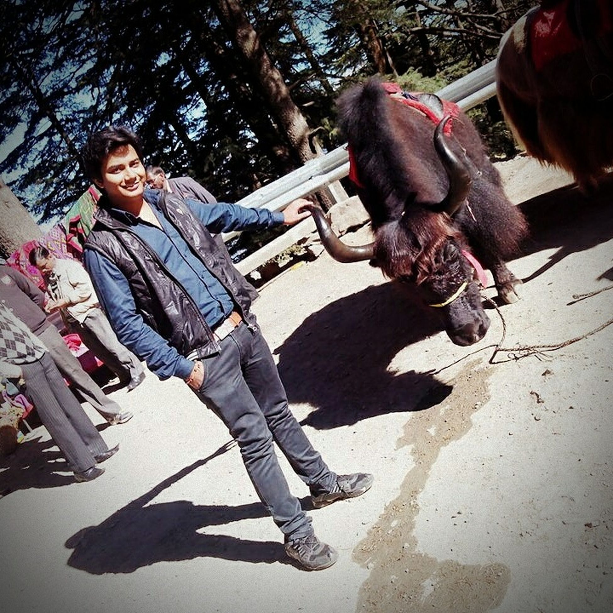Shadow Sunlight Lifestyles Togetherness Full Length Well-dressed Outdoors Yalknowwhattimeitis Manali India Shadow Sunlight Casual Clothing Lifestyles Togetherness Full Length Leisure Activity Person Bonding Tree Young Adult Day Outdoors Well-dressed