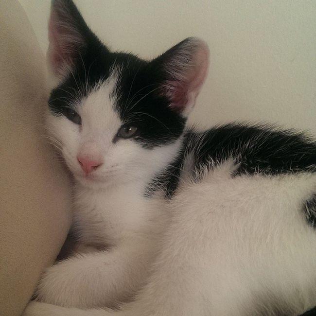 The new addition to our family, Hugo. Cuteasabutton Buzzisgoingtokillus @s4mmieb @vic_apple