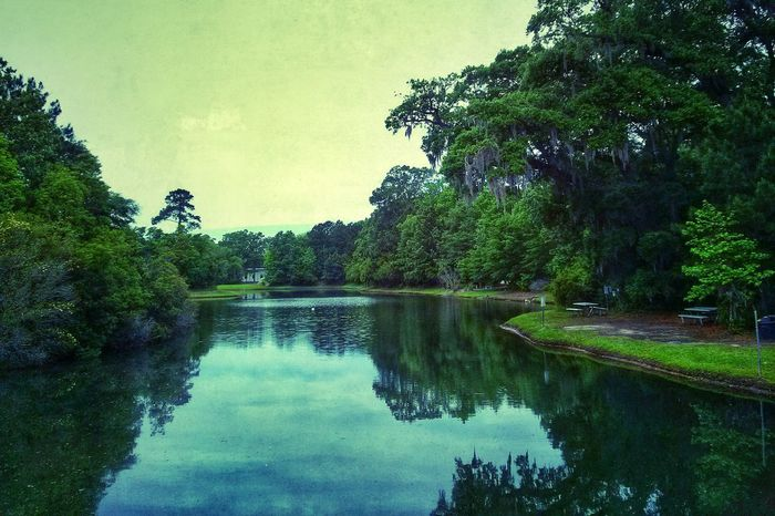 Enjoying the greenery. Nature Landscape Water Reflections Trees