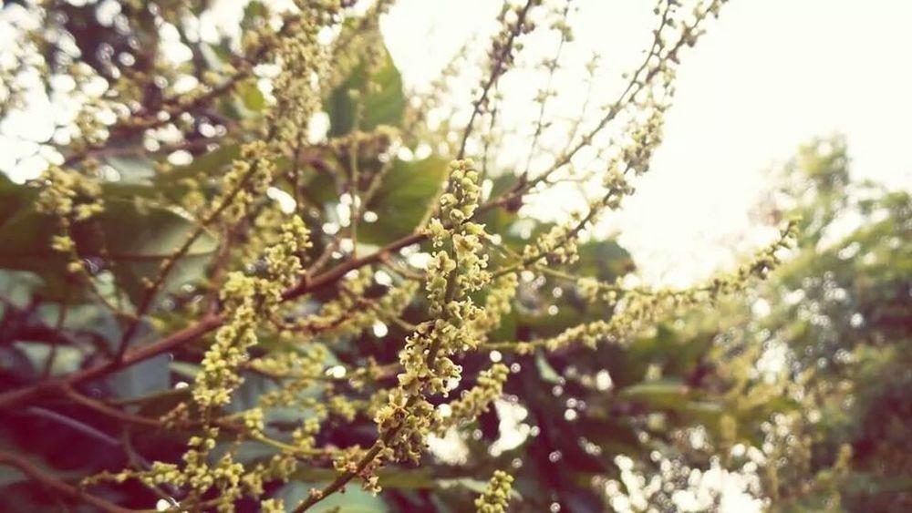 Flowers,Plants & Garden Flowers
