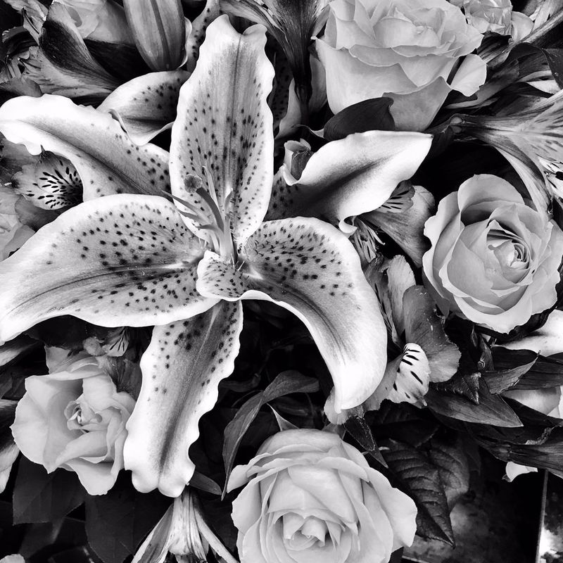 Flowers Flower Stargazerlilies Lillies Bouquet Roses Blackandwhite Blackandwhite Photography This Is Why I Take So Long At The Store Black And White Black And White Photography Monochrome Monochromatic IPhoneography