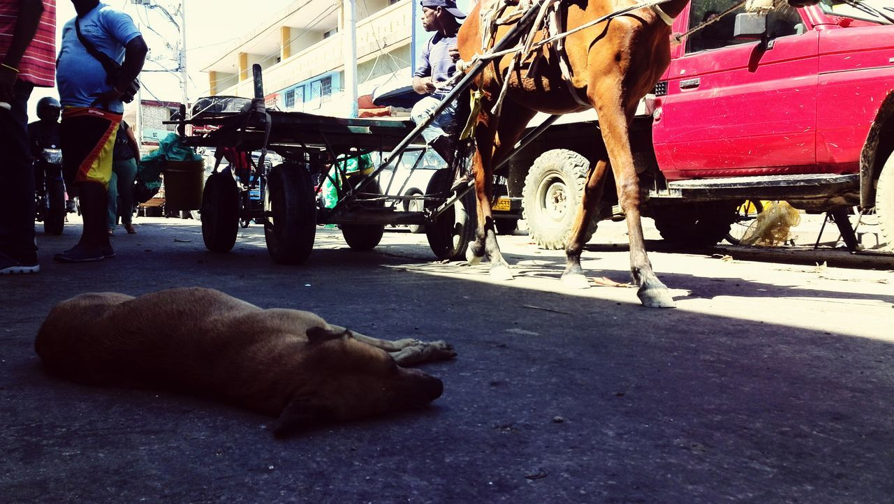 Dog Resting in the shadow