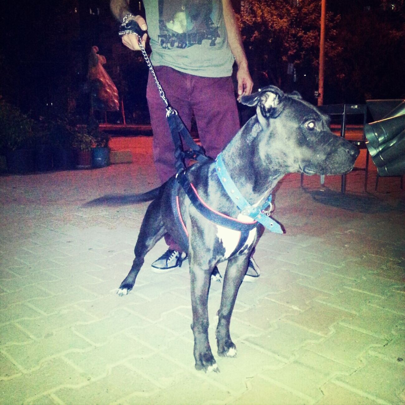 Meet Paris !!! Check This Out Wild Beast In Adana