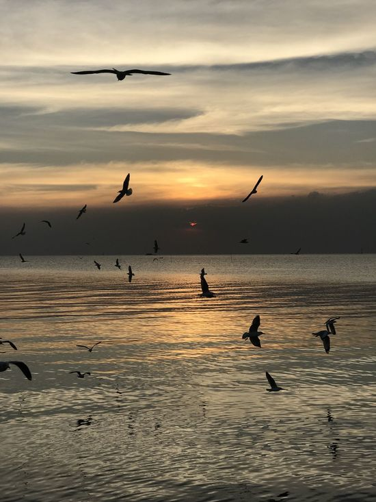 Animal Themes Animal Wildlife Animals In The Wild Beach Beauty In Nature Bird Cloud - Sky Day Flock Of Birds Flying Horizon Over Water Nature No People Outdoors Scenics Sea Sky Sunset Water
