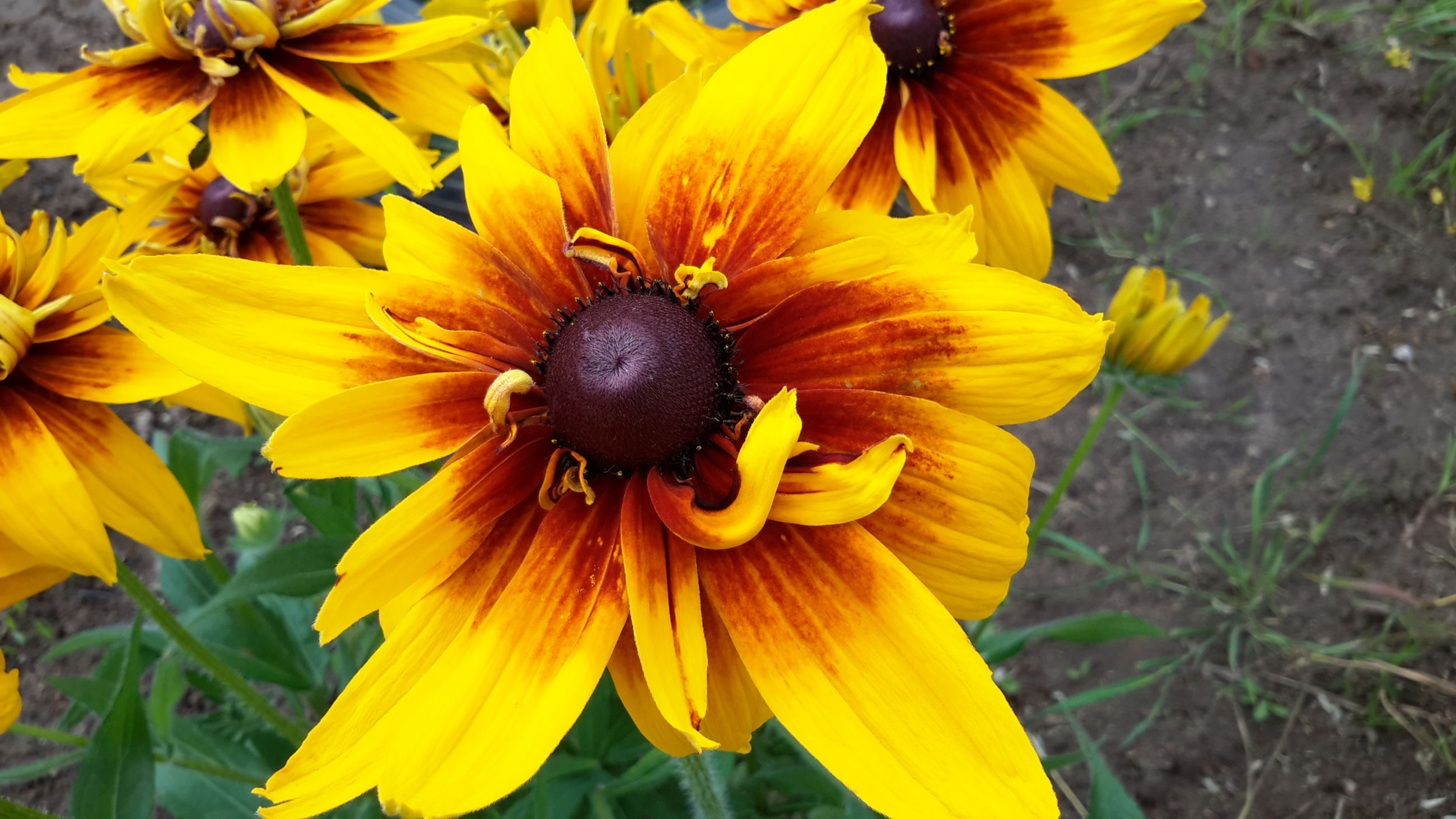 flower, petal, fragility, yellow, flower head, freshness, beauty in nature, nature, growth, pollen, one animal, outdoors, day, animal themes, no people, plant, close-up, blooming, animals in the wild, black-eyed susan
