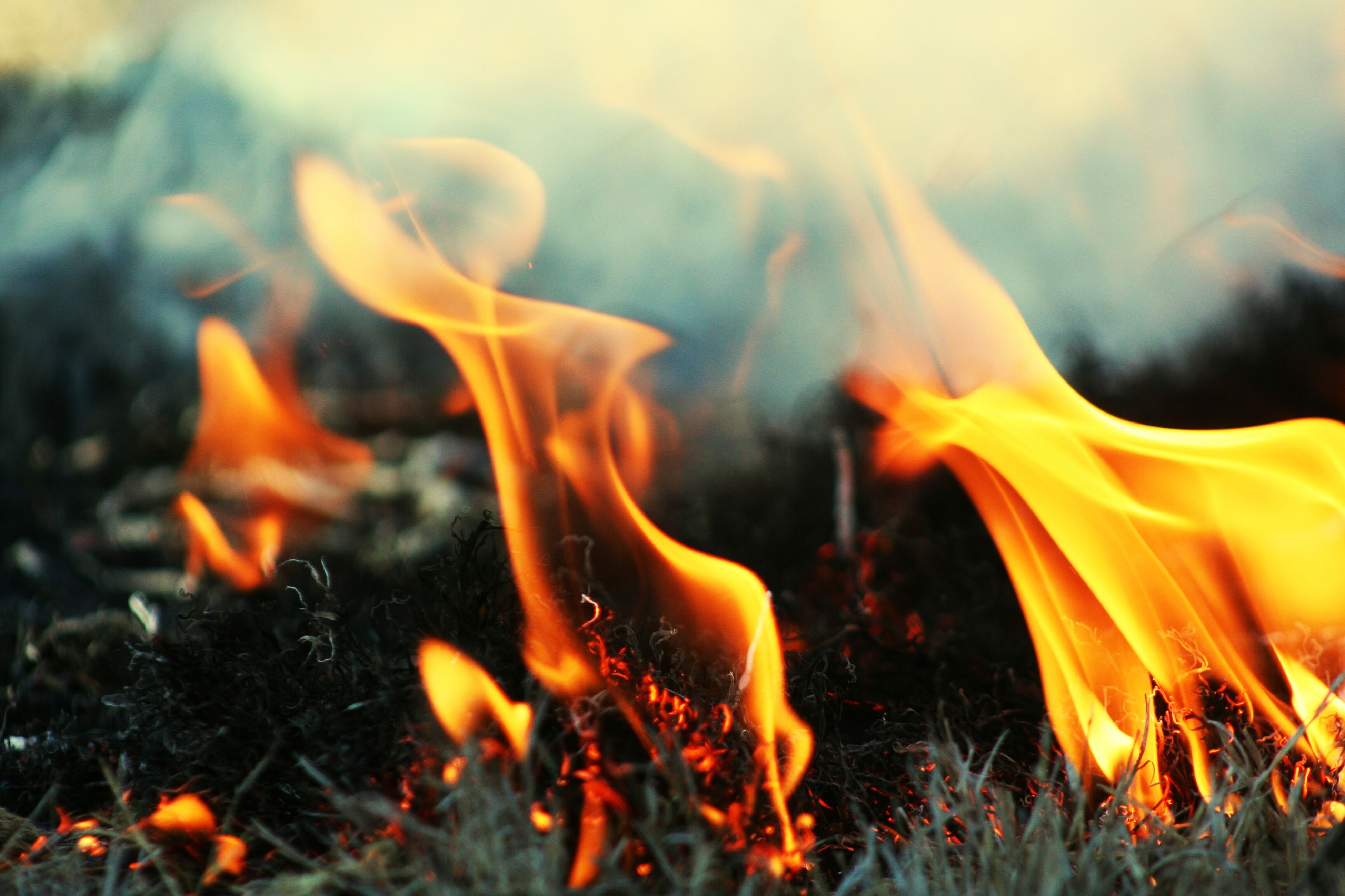 heat - temperature, burning, flame, smoke - physical structure, orange color, glowing, outdoors, fire, no people, close-up, bonfire, motion, nature, forest fire, ash, day