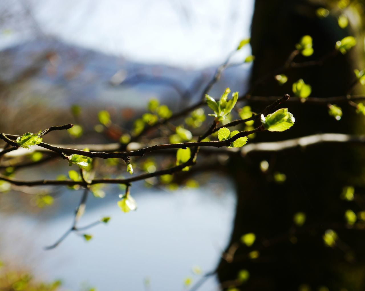 Nature Leaf Close-up Branch Plant Water No People Beauty In Nature Growth Outdoors Tree Day Landscape Freshness Agriculture... Spring has come...