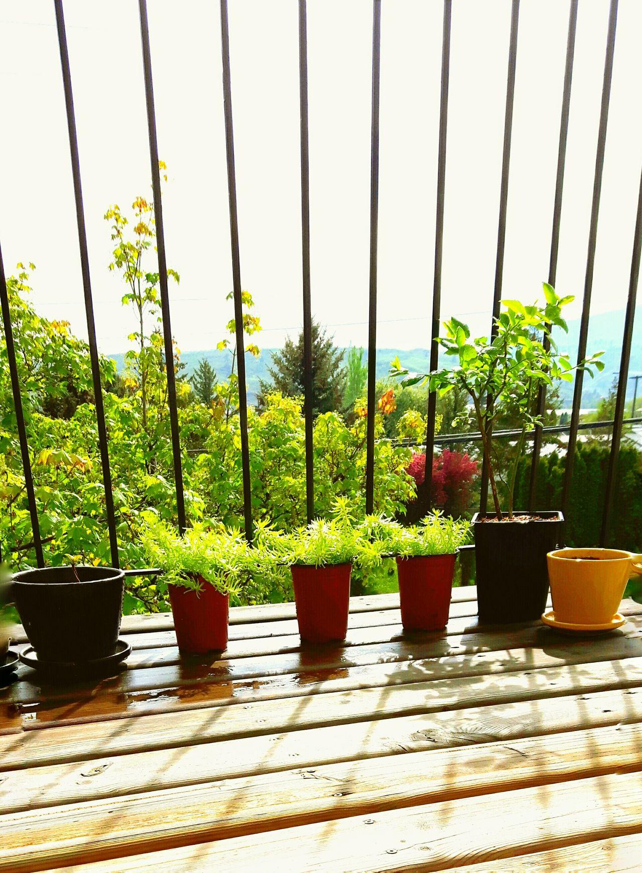 Patiogarden Green Green Green!  Loveplants Taking Photos Tree Enjoying Life