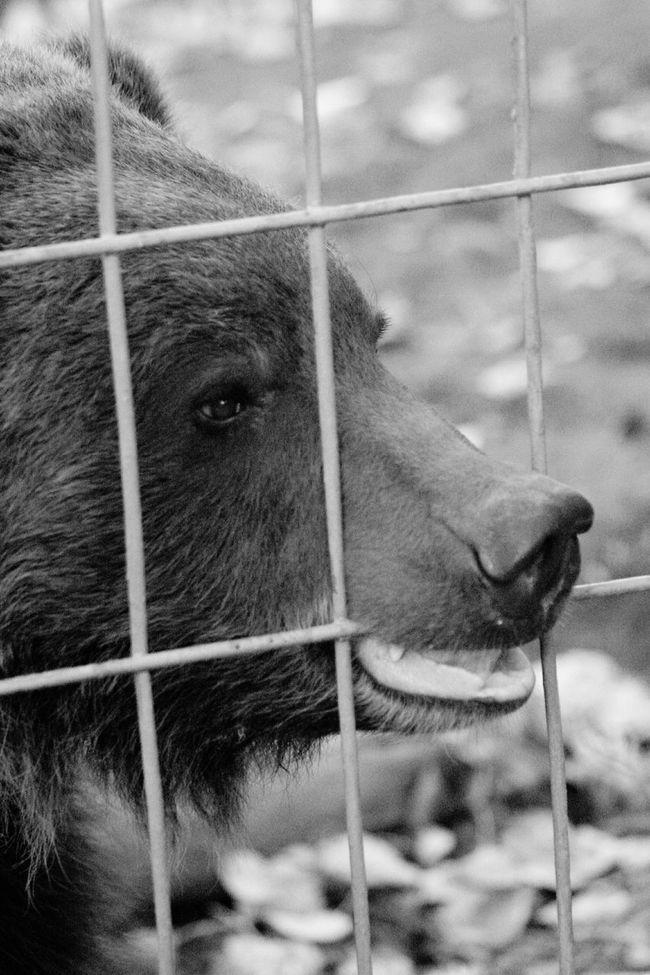 Zoo Animals  Bears Black & White Blackandwhite Black&white Black And White