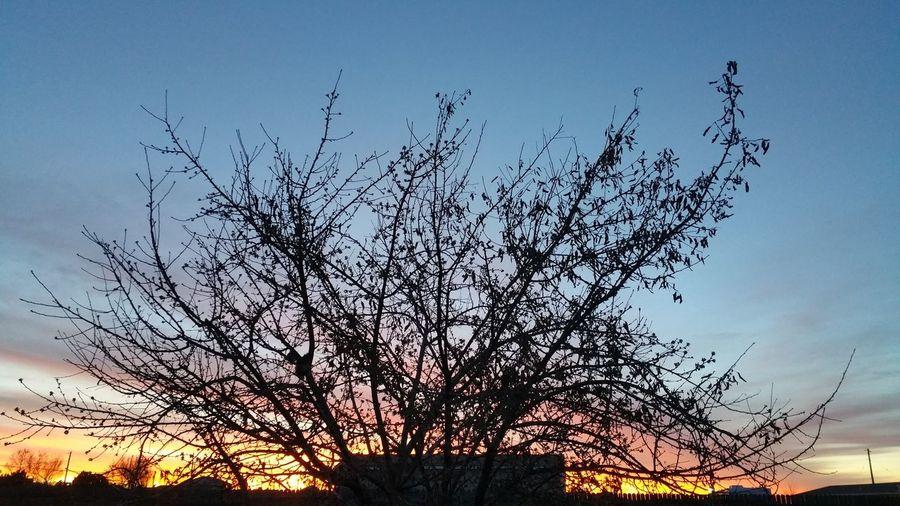 Peaceful Morning Sunrise Tree Sillouette Soft Colors  Beautiful Sunrise In Colorado Pink Yellow Orange Purple Blue Sky