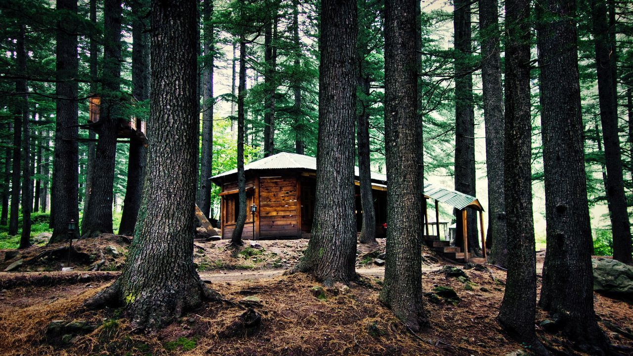A Lone Log Cabin in the Woods.... Amazing Pakistan Architecture Built Structure Eerie Forest Life In The Woods Log Cabin Outdoors Pinetrees Tree Tree Trunk WoodLand Woods