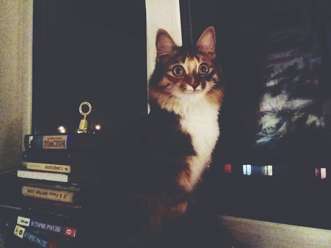 domestic cat, pets, domestic animals, one animal, mammal, animal themes, feline, cat, no people, sitting, indoors, portrait, day