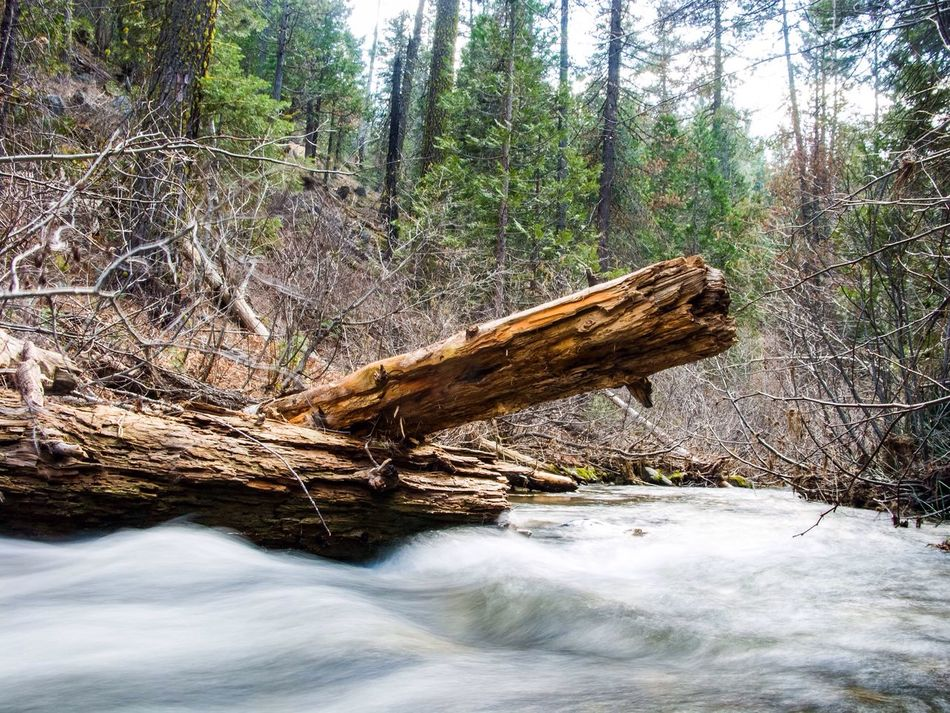 Photography In Motion Stanisluas National Forest Jenness Park California River Sierra Nevada Forest Water Logs Rapids Slow Shutter Mountains Canon Powershot G9 Canon Photoshopexpress