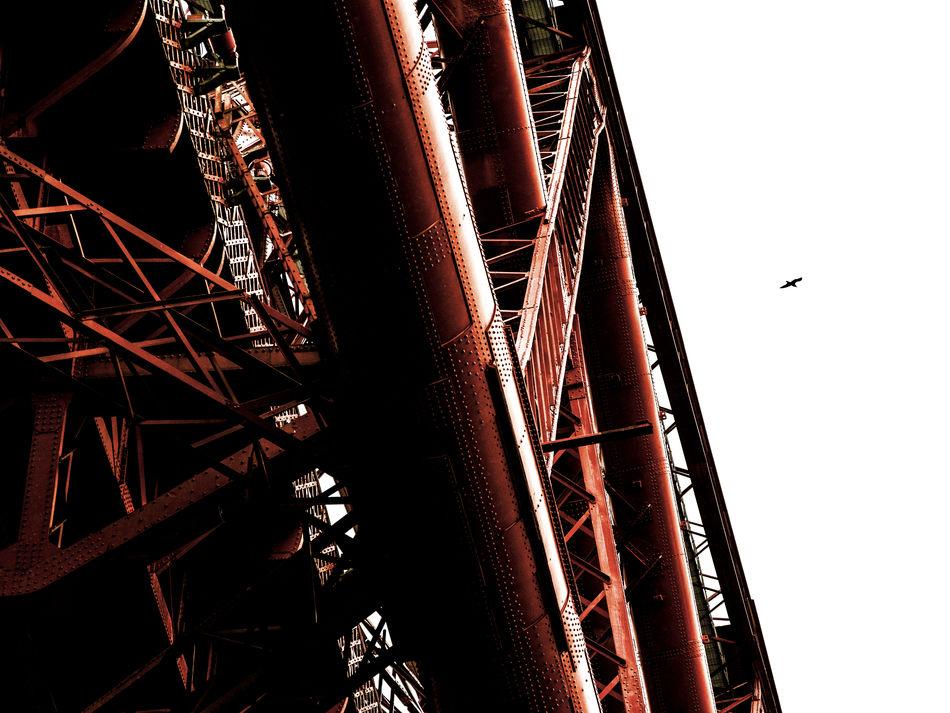 Bird Bridge Built Structure Engine Flying Forth Bridge Girder Low Angle View Sky