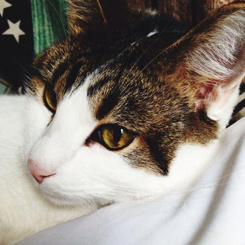 Henry Lovelovelove Hello Kitty