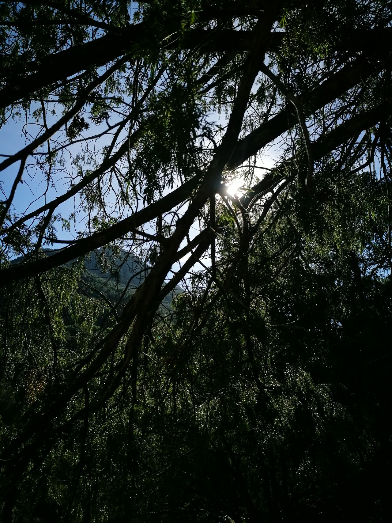 Live Day Outdoors Tranquility Tree Canopy  Nature Tree Trough The Trees Relaxing Time Sky Light Scape