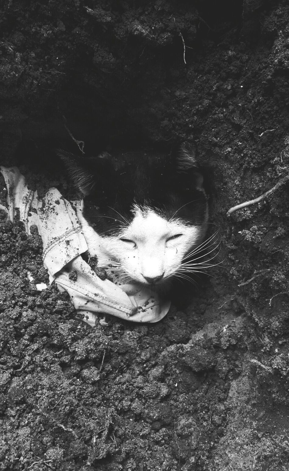 RIP :( ?Cat♡ ? YouMakeMeSmile Sad & Lonely So Sad... :((( Lost Goodbye Go To Heaven Missing You Bff❤??