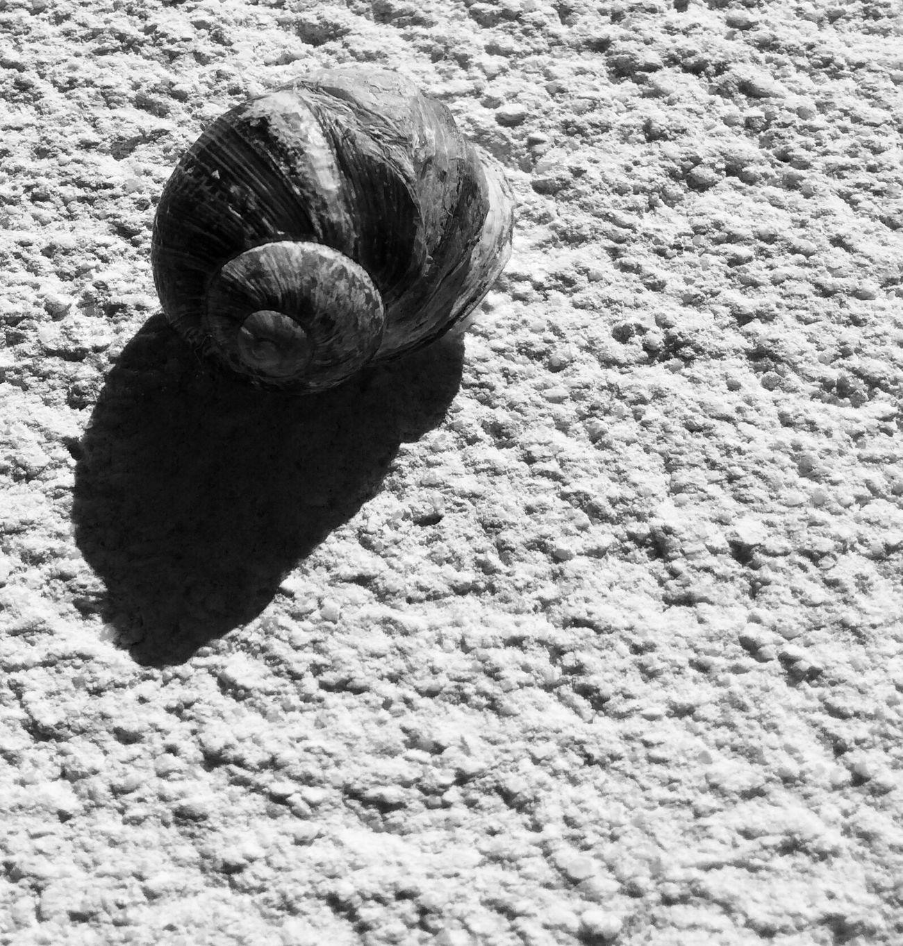 Nature Escargot Blackandwhite Noir Et Blanc