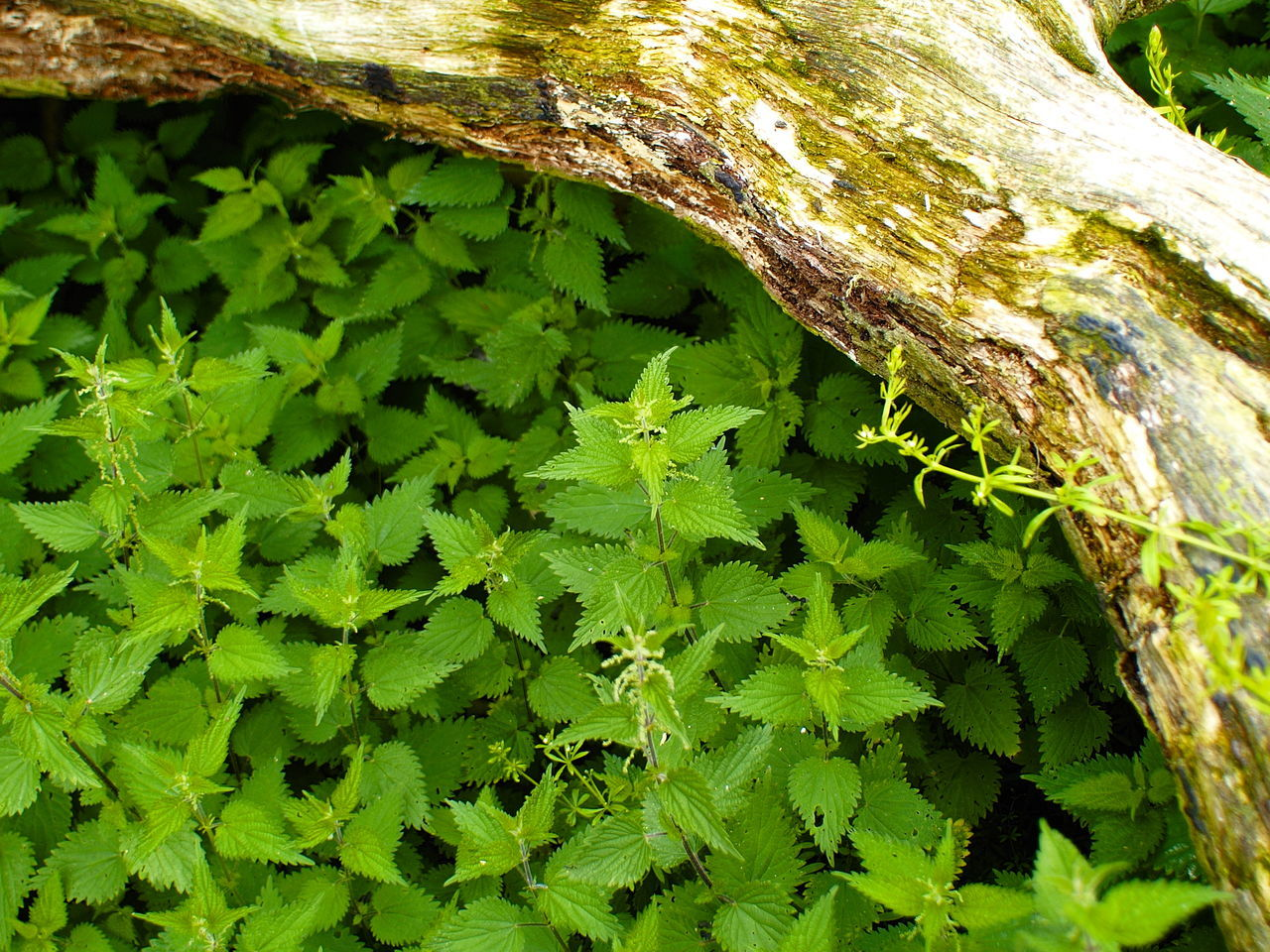 green color, growth, nature, leaf, outdoors, day, close-up, tree trunk, no people, plant, tree