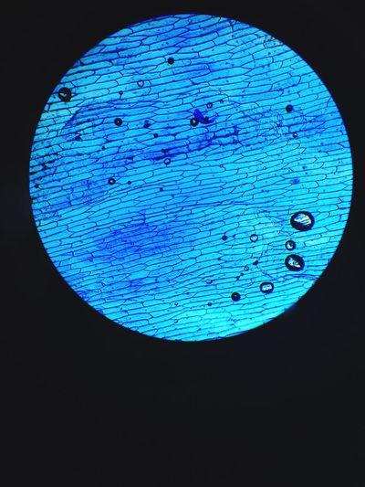 Onionskincell Microscope Indoors  Close-up Circle Blue Round Electric Light Geometric Shape Circular Symbol Studio Shot