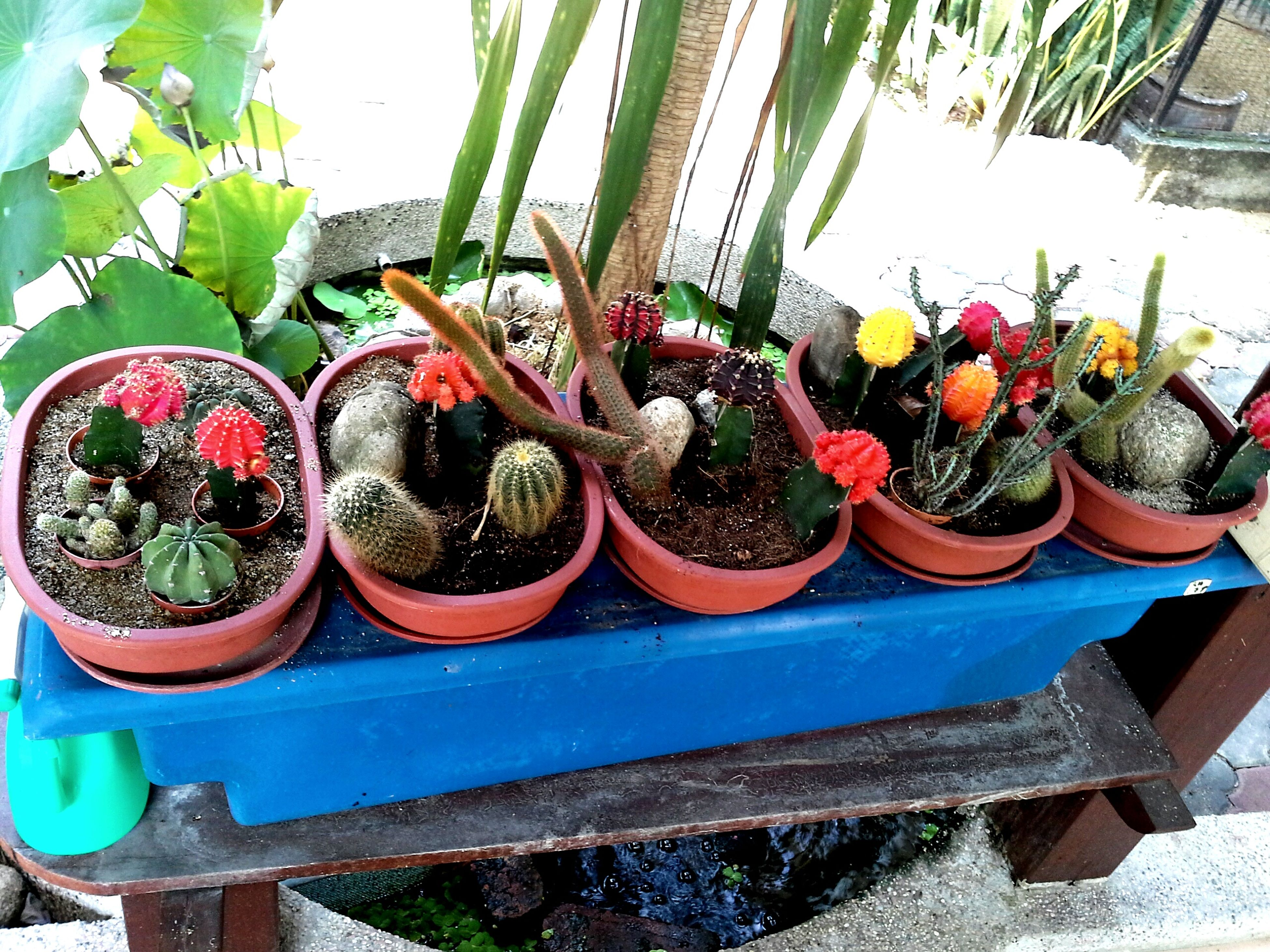 large group of objects, abundance, potted plant, variation, growth, freshness, for sale, arrangement, food and drink, plant, food, fruit, healthy eating, choice, basket, retail, cactus, day, market, market stall