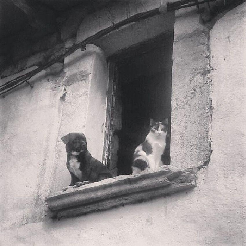 Uncaiunmoix Alaro Mascotas Pet Blackandwhite Bwn_planet Byn