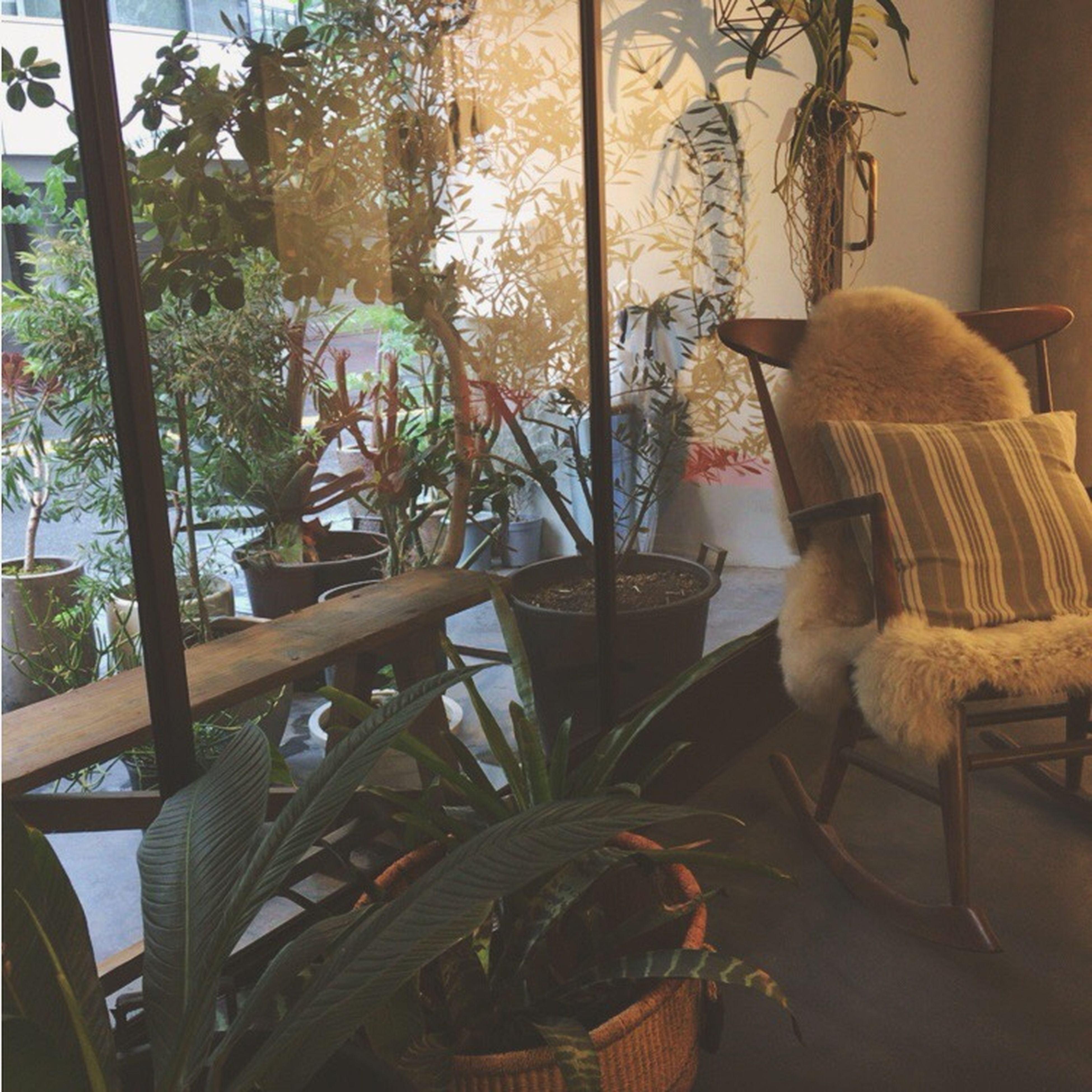 indoors, chair, table, window, home interior, empty, plant, growth, day, domestic life, arrangement