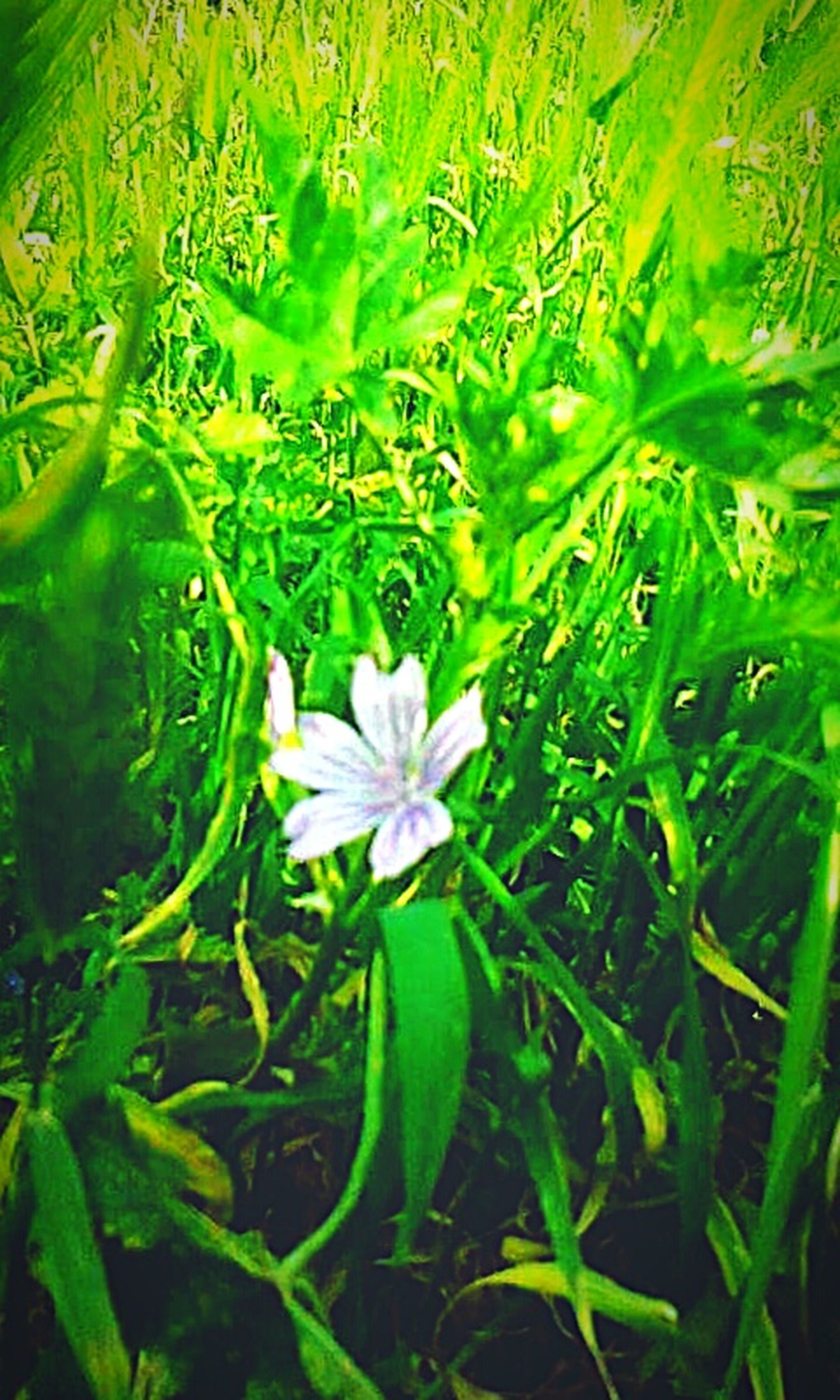 flower, growth, freshness, fragility, beauty in nature, green color, plant, petal, nature, field, flower head, blooming, leaf, close-up, grass, in bloom, high angle view, day, outdoors, green