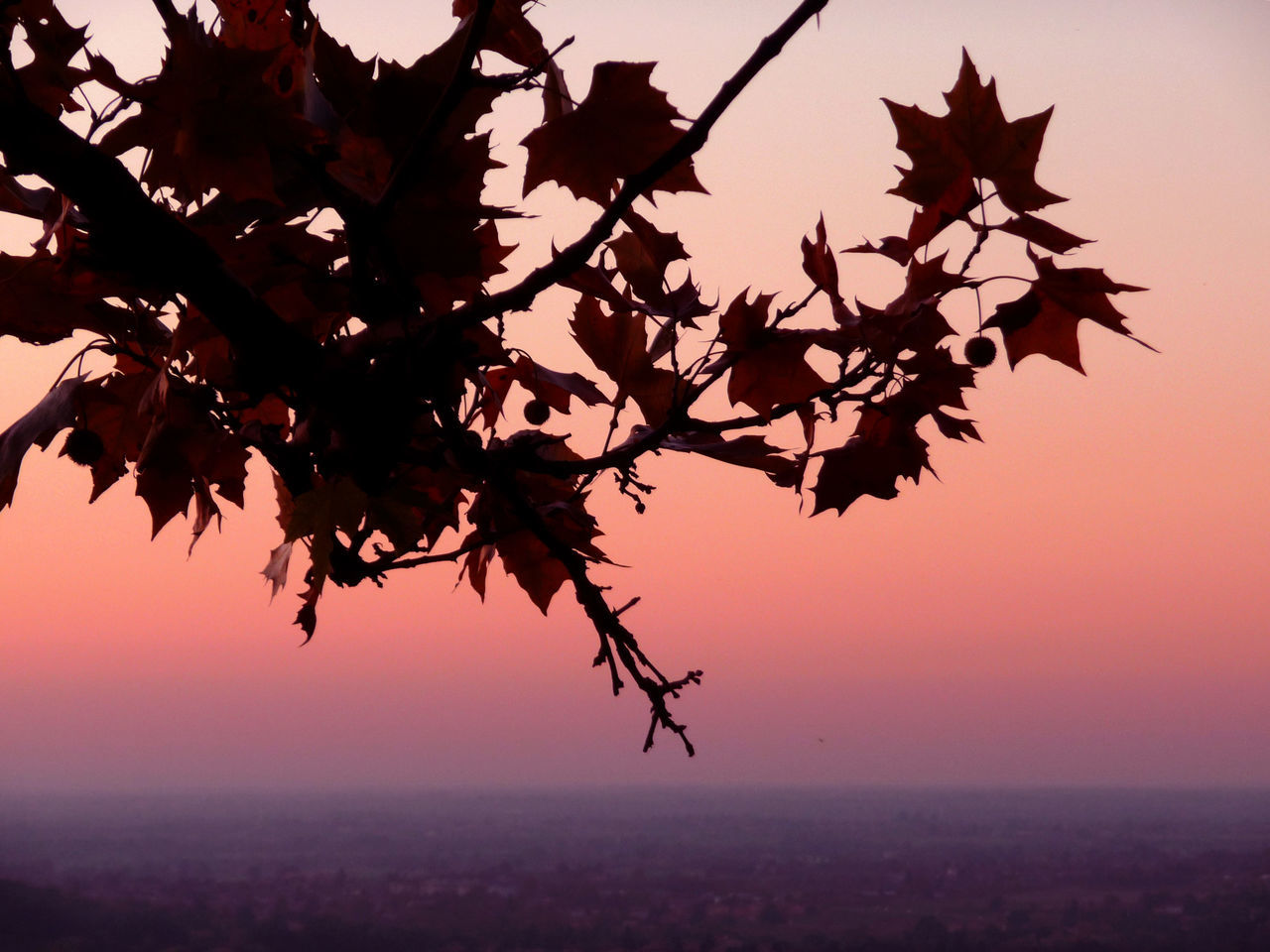 tramonto ad Albinea (Reggio Emilia) Beauty In Nature Branch Leaf Leaves Nature Sky Sunset Tree