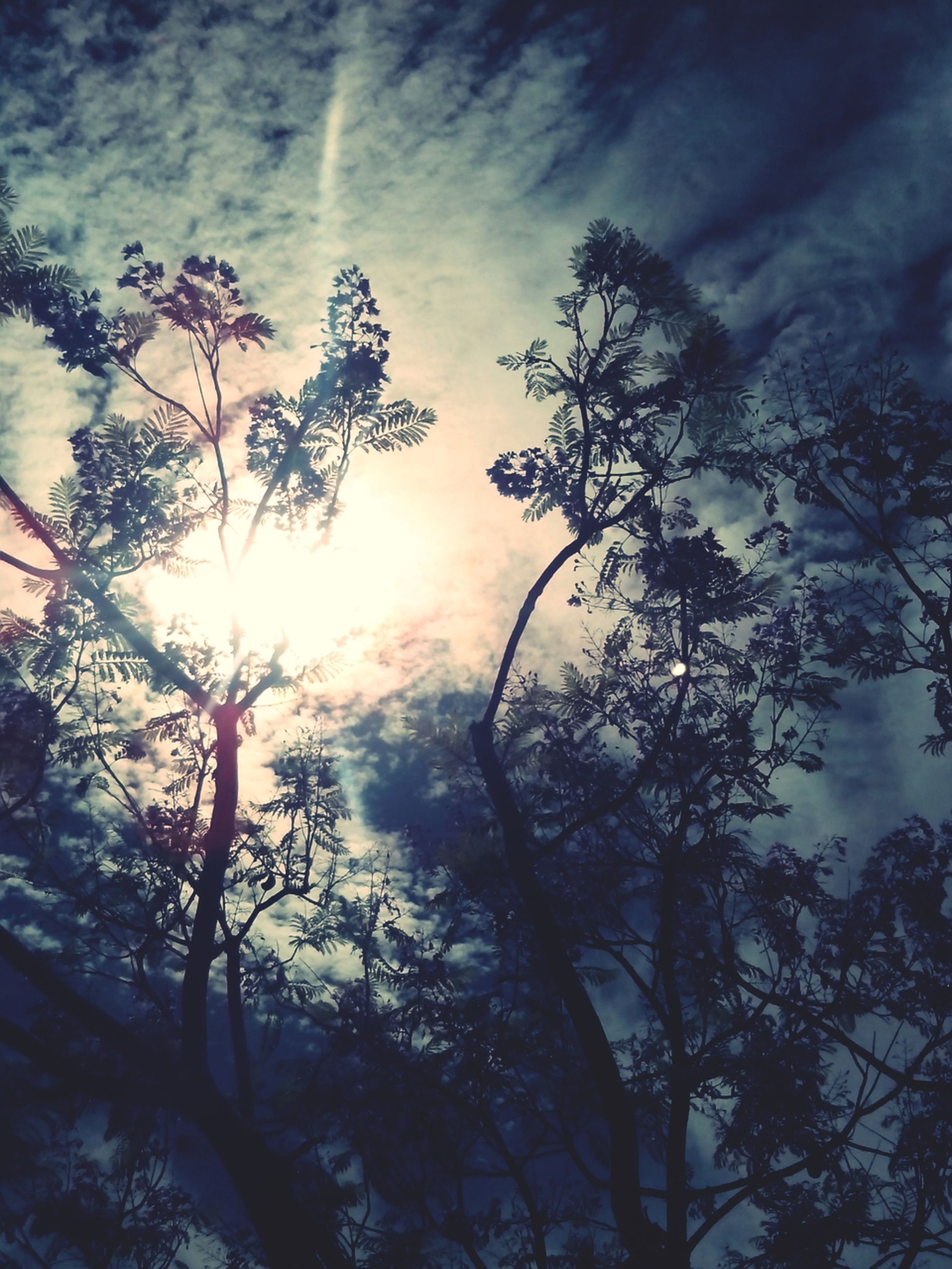 tree, low angle view, sky, sun, cloud - sky, branch, silhouette, beauty in nature, tranquility, nature, growth, sunbeam, scenics, cloudy, sunlight, tranquil scene, sunset, cloud, lens flare, outdoors