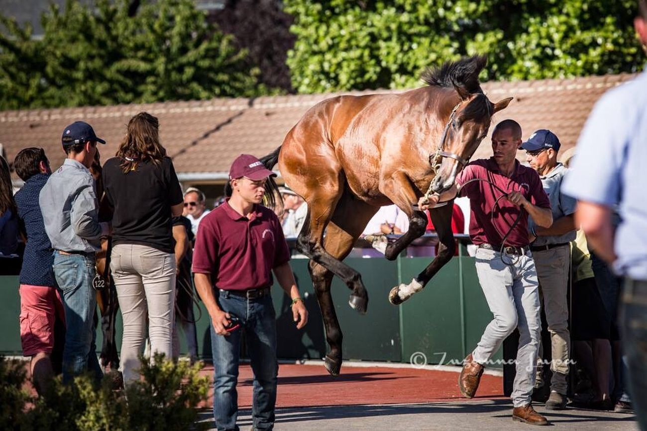 This picture 😨😍 Sale Arqana Horse Yearling Amazing Beautiful Myjob Thouroughbred InFrance August Sales Deauville Effects & Filters
