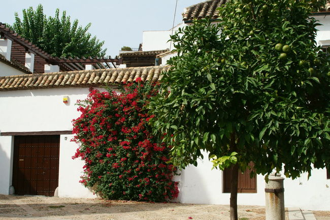 my eyes Architecture Blue Building Exterior Built Structure Colours Cordoba Spain Day No People Point Of View Red Flower Street Yellow