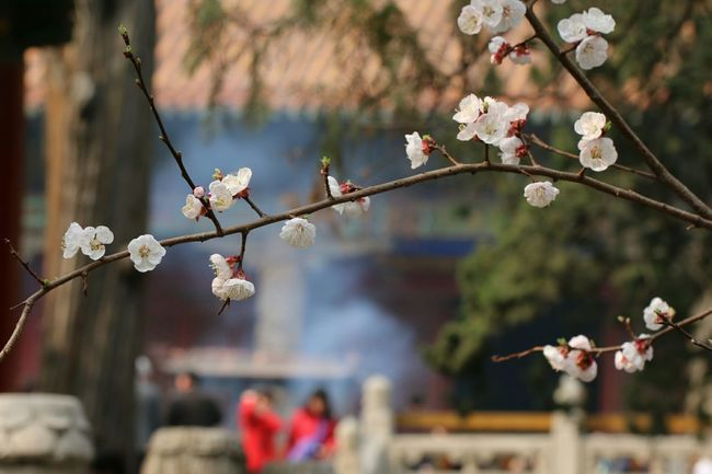 My City Sunlight 曲阜 Spring! Oudside Spring Flowers Flowers Morning Light Love ♥