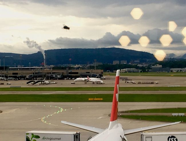 Fly-ing into Zürich Lookclosely Bug Airplane Swiss Airlines Swissair Juxtaposition Traveling Home For The Holidays
