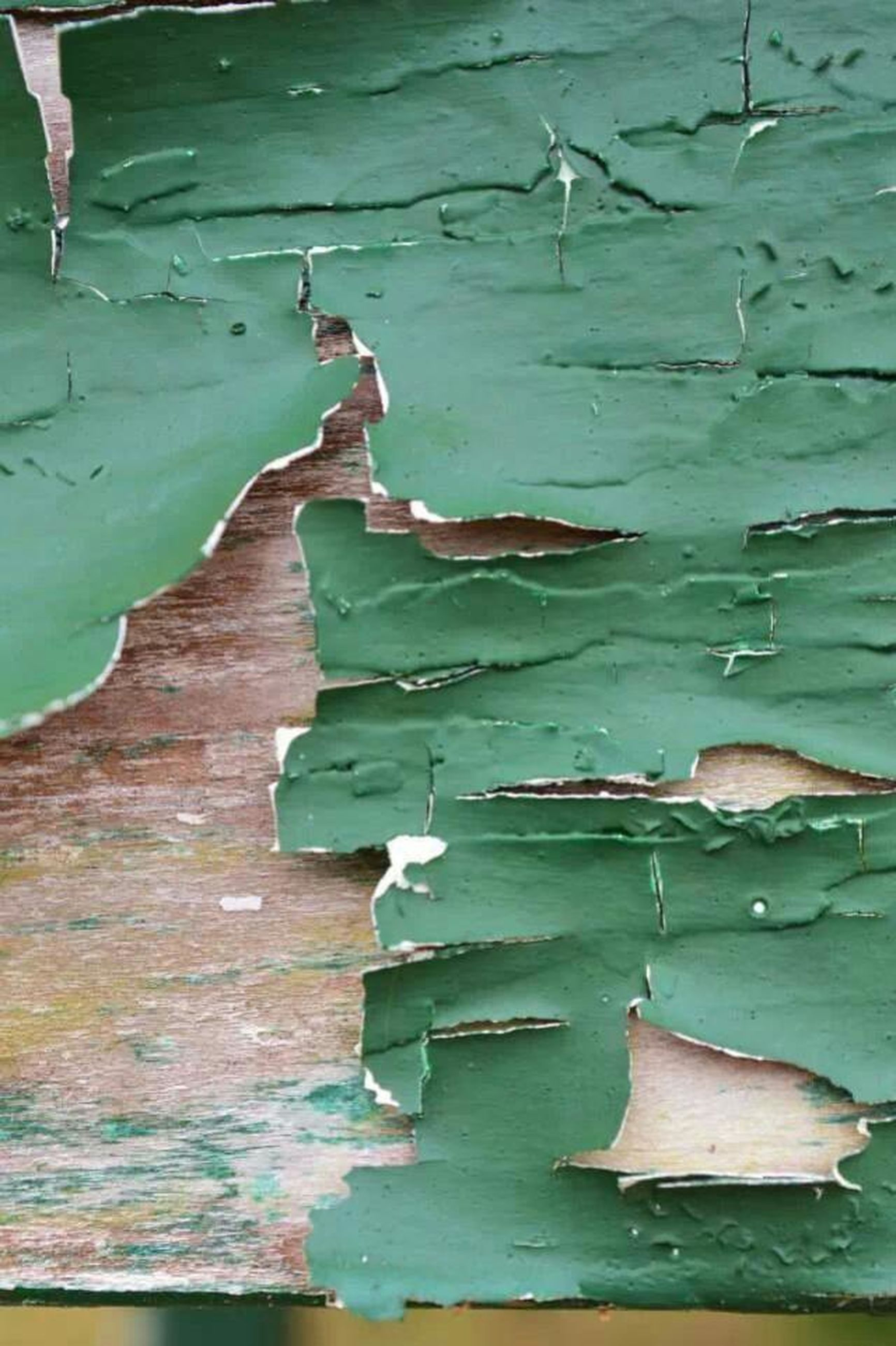 leaf, water, green color, blue, wood - material, day, high angle view, outdoors, wall, built structure, weathered, reflection, wall - building feature, nature, no people, wildlife, animal themes, close-up, plank, pond