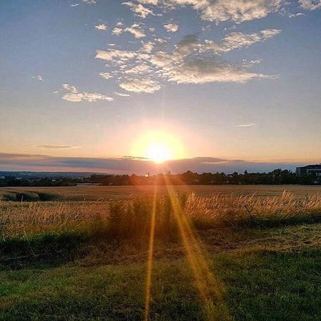 Beauty In Nature Field Landscape Agriculture Sunset Nature Tranquil Scene Sunlight The Week On EyeEm The Week Of Eyeem Beauty In Nature Sky Sun No People Scenics Growth Outdoors Grass Day God's Beauty