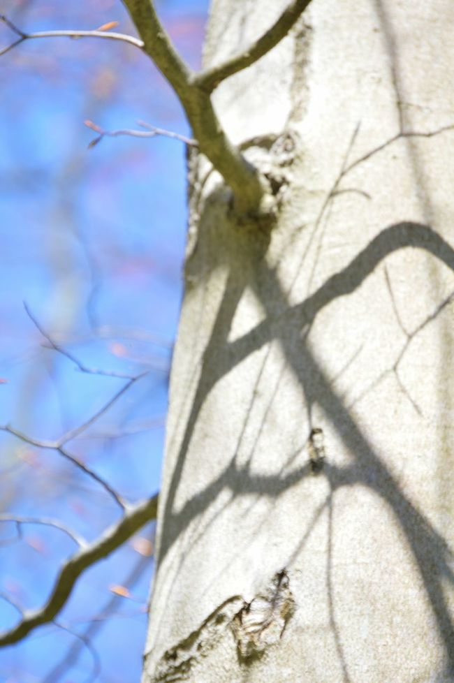 Shadows on a tree trunk Beauty In Nature Branch Close-up Day Focus On Foreground Growth Nature No People Outdoors Shadows On Trees Tree Tree Trunk Twig