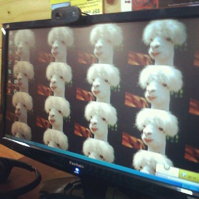 Hahaha Andrei and Steve did this to works computers when they came over a couple mo.ths ago haha llamas