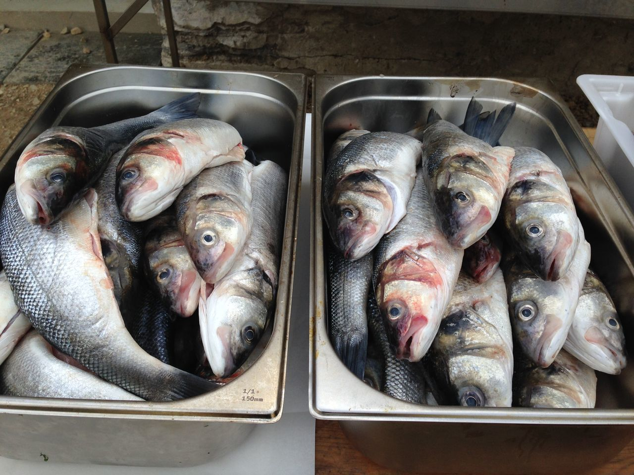 Beautiful stock photos of fish, Close-Up, Consumerism, Container, Day
