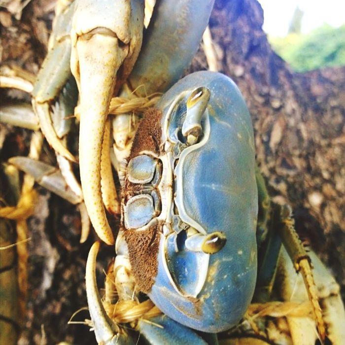 Crab - Seafood Crab Legs Crab Time
