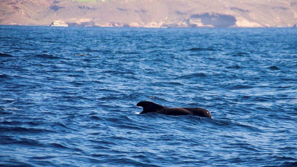 Beautiful stock photos of wal, Animal Body Part, Animal Themes, Animals In The Wild, Aquatic Mammal