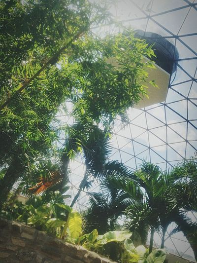 Botannical garden des moine Nature Outdoors Plant Architecture Low Angle View Sky Day No People Greenhouse First Eyeem Photo
