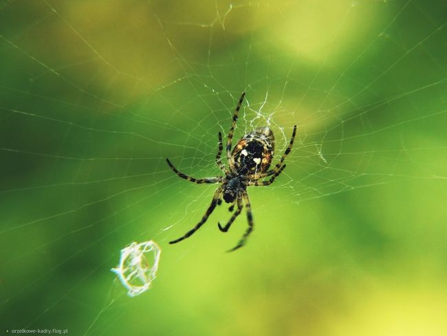 Nature Panasoniclumix Photo Macro Green Picture Panasonic  Naturelovers Likeforlike Photographer Spider Spiderweb Web Followforfollow L4l F4F Follow4follow Like4like LovePhoto Photography Photoblogger Vintage Tumblr Grunge Poland