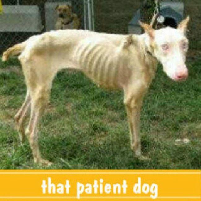 It's been proven that there r no more bones left for the patient dog Insane Pix Instacreep Instacrap