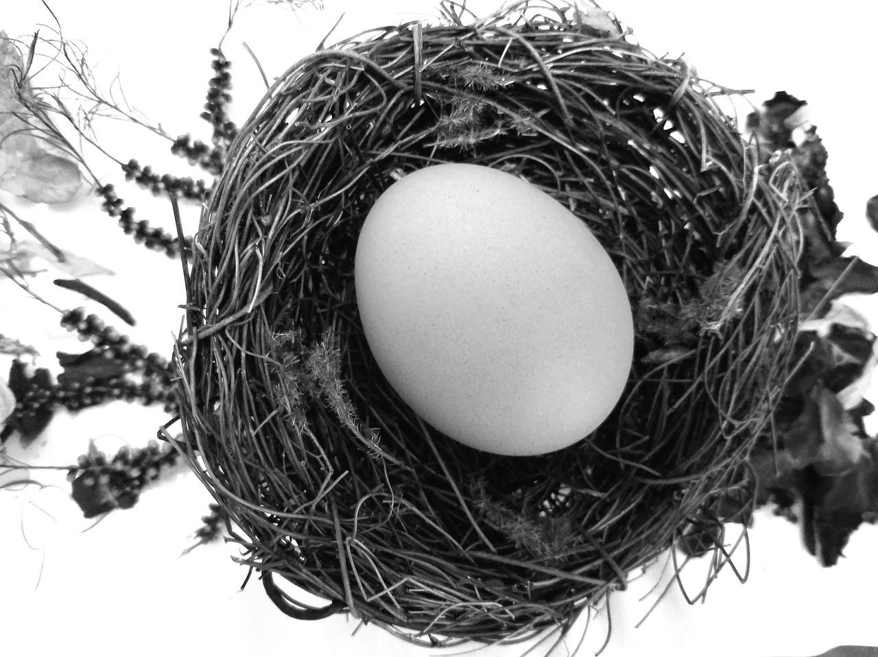 B&W Nest Animal Egg Animal Nest Bird Nest Black And White Photography Celebration Close-up Day Easter Easter Egg Egg Fragility Holiday - Event Indoors  MUR B&W Nature Nest New Life No People The Song Of Light BYOPaper!