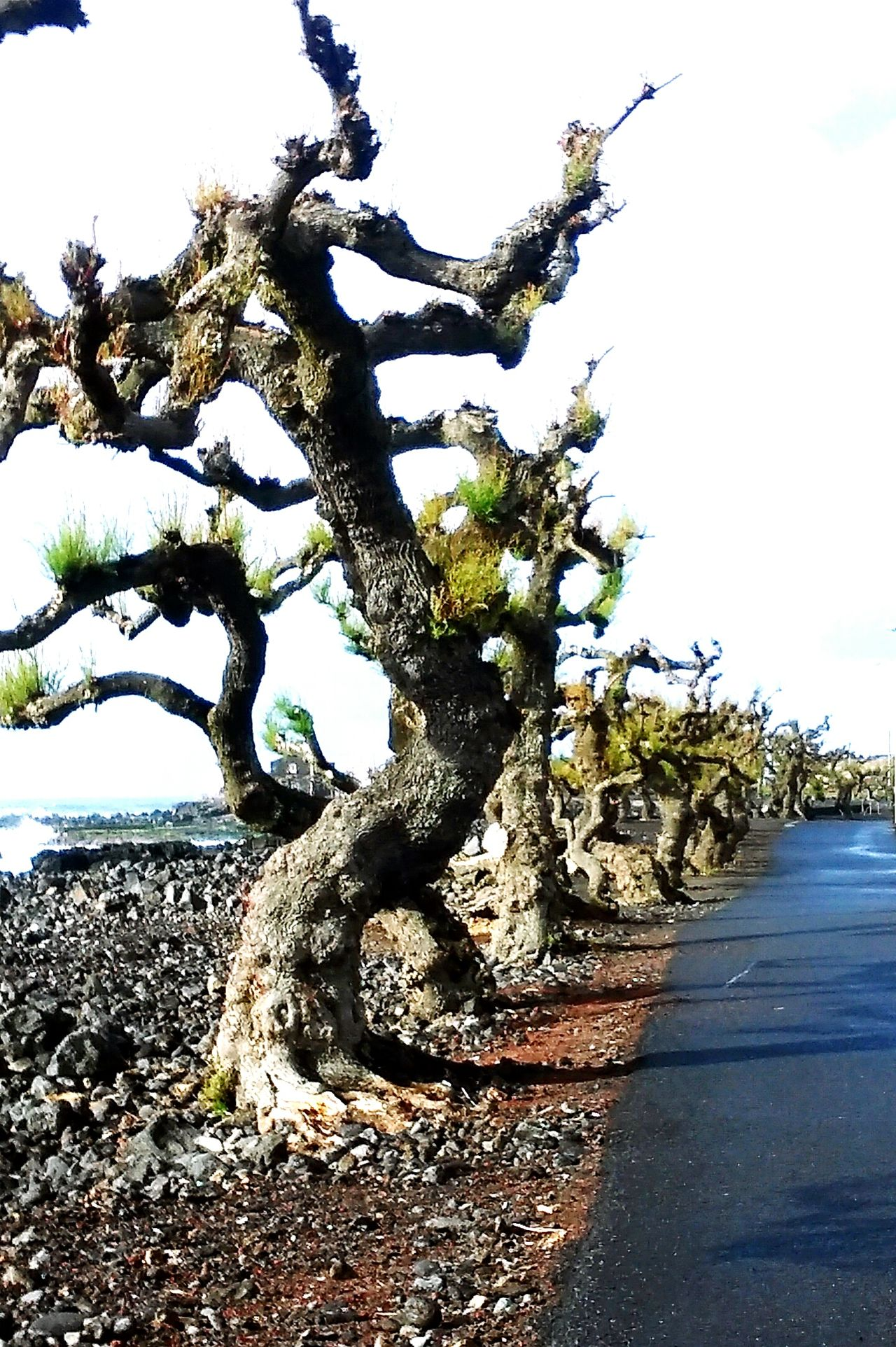 Pico Azores Ocean Plants 🌱 Atlantic Ocean Day Water Nature Tree Beach Outdoors Cloud - Sky Sky No People Beauty In Nature Sea Scenics