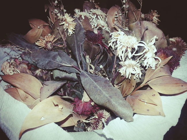 Colour Of Life Flowers Flowers, Nature And Beauty Flowerlovers Lovesflowers Oldflowers Oldlove Vintageflowers AnOldMemory Home Is Where The Art Is