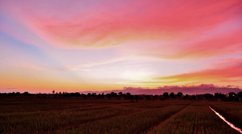 Agriculture Field Sunset Rural Scene Nature Landscape Beauty In Nature Cloud - Sky Growth No People Outdoors Tranquil Scene Sky Scenics