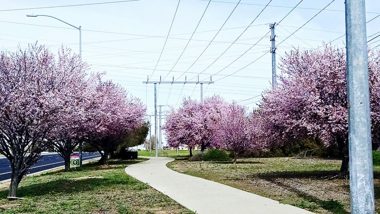 Pastel Power Intereting area! Spring has definietly sprung and left us in pastel heaven. Powerlinesaresoscenic Powerlines Blooming Tree Roseville, CA Roseville Roseville Ca Openspace Taking Photos Trees Blooming Urban Nature UrbanHiking