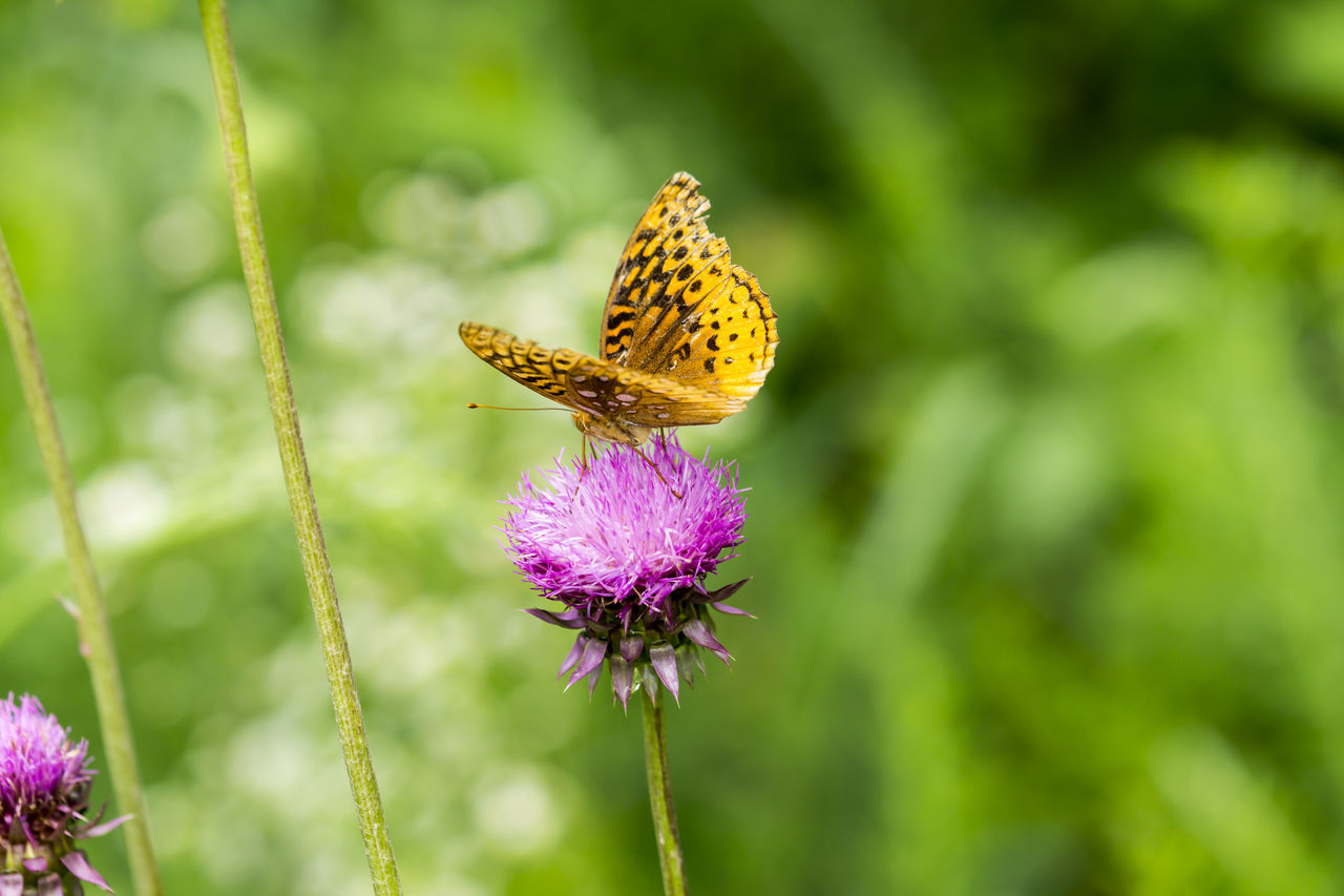 Beauty In Nature Butterfly Flower Flower Head In Bloom Insect Moth Pollination Wildlife